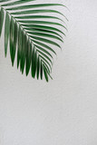 Tropical palm leaves, greenery against white wall. Creative layout, toned image filter, minimalism - 241811558