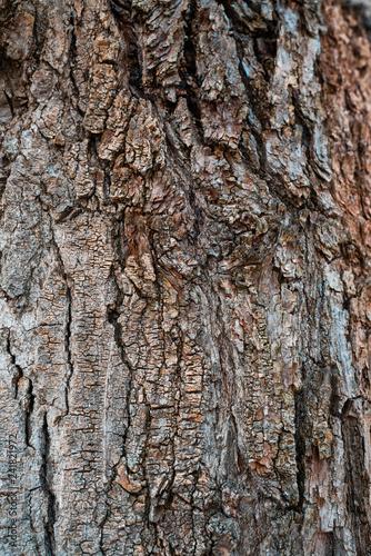 Tree bark background texture pattern. Wood texture. - 241821972