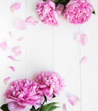 beautiful pink  peony flowers