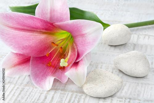 Leinwanddruck Bild Lily and stones