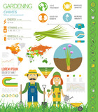 Chives onion beneficial features graphic template. Gardening, farming infographic, how it grows. Flat style design - 241852783