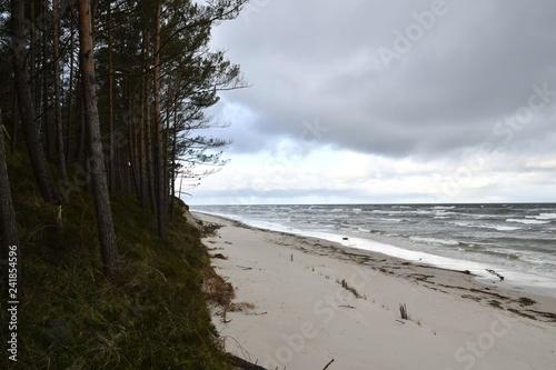 Winter on the beach of Debki - 241854596