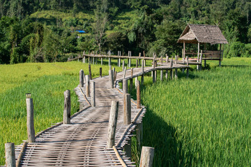 Bamboo weave walk way bridge over rice field. © happystock