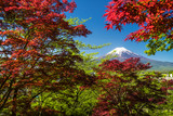 Fuji mountain background and walkway with red maple around - 241863902