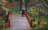 Haguro Mt, Tsuruoka, Japan - November 11, 2018: Visitor walking over red bridge at Haguro Mountain - 241869726