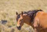 Retrato de un caballo parado de costado y con la cabeza girada mirando hacia la cámara - 241885508