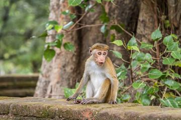 Little monkey sits on the parapet