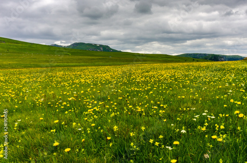 Clouds over mountain meadow with yellow wildflowers