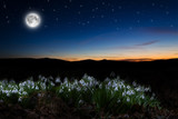 Beautiful snowdrops background and full moon