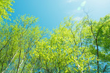 Fototapeta Fototapety na ścianę - spring panorama of a scenic forest of trees with fresh green leaves and the sun casting its rays of light through the foliage © aarud