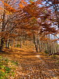 Trail in mountains covered by fallen leaves. Beskids Mountains in autumn, Poland. - 241913772