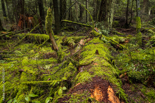 old forest filled with falling trees covered in green mosses