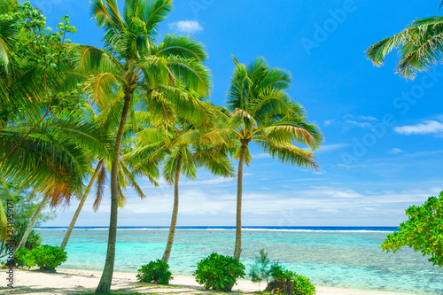 Leinwandbild Motiv An idyllic beach with palm trees in Rarotonga in the Cook Islands