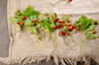 Fresh strawberries on linen background