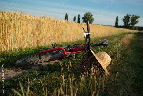 Summer landscape with bycicle