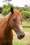 Cavalo IMG_8434 - 241998945