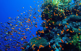 Coral reef Red Sea.