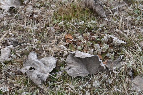 prato ghiacciato invernale