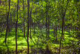 shadow in green forest - 242037770
