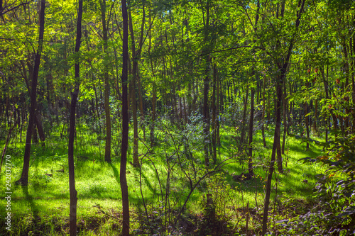 shadow in green forest