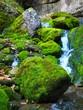 Leinwanddruck Bild - En el bosque