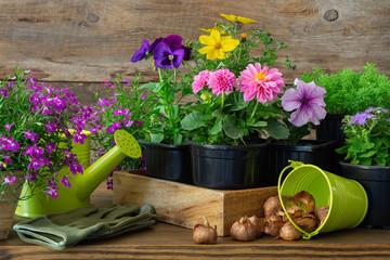 Seedlings of garden plants and flowers in flowerpots, bulbs of spring flowers. Garden equipment: watering can, bucket, gloves.