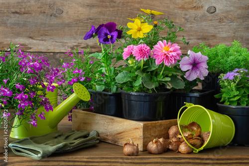 Leinwanddruck Bild Seedlings of garden plants and flowers in flowerpots, bulbs of spring flowers. Garden equipment: watering can, bucket, gloves.