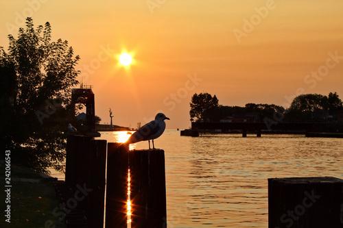 obraz lub plakat Seagull, Sunset, and Sparkles