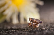 little insects mating on concrete floor/background of blurred flower