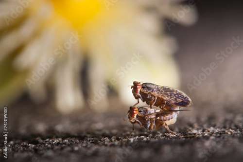 little insects mating on concrete floor/background of blurred flower - 242095100