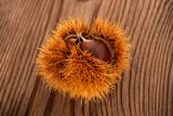 Chestnut in husk - 242096117