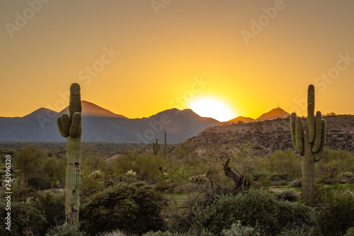 obraz lub plakat The Saguaro cactus is a true symbol of the American west and its desert landscape. These stunning images shot in Arizona's vast wilderness reveal beautiful mountains as a backdrop to these nature pics