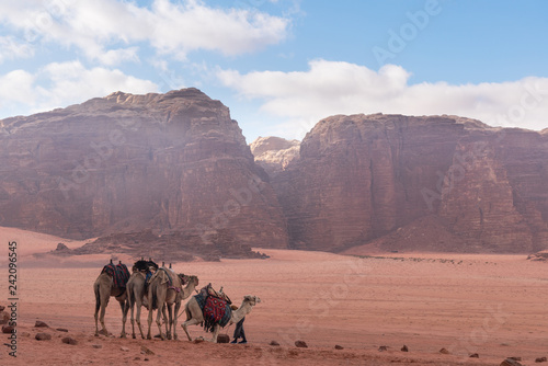 Wadi Rum desert landscape in Jordan with camels chilling in the morning
