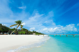 tropical Maldives island with white sandy beach and sea - 242101748