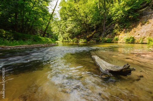 Beautiful and clean river Kamenice flowing through the woods and rocks