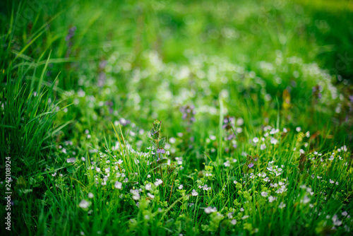 Nature, spring, blossoming, grass. The spring field with beautiful wild flowers