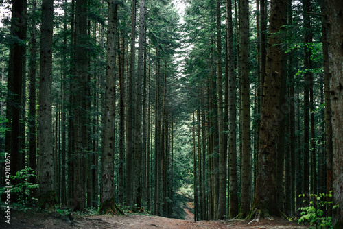Nature, spring, tree, wood. Forest track. It can be used as a background