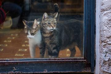 Chats derrière une porte