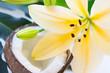 Leinwanddruck Bild - Coconut spa wellness natural skin care concept