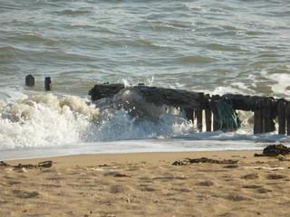 neige arbre eau sable plage mer océan gargouille © Sophie