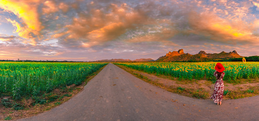 Sunflowers field at Khao Jeen Lae,Lopburi Province,Thailand...