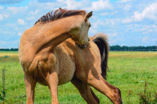 Horse grazing in pasture on a summer day.