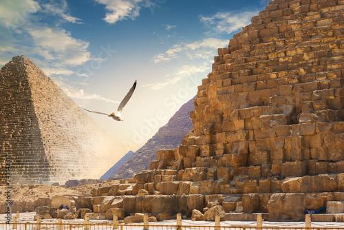 Gyramids in sand deser - 242142317