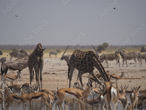 Aniamals at etosha national park