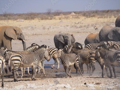 Etosha national park Animales - 242150950