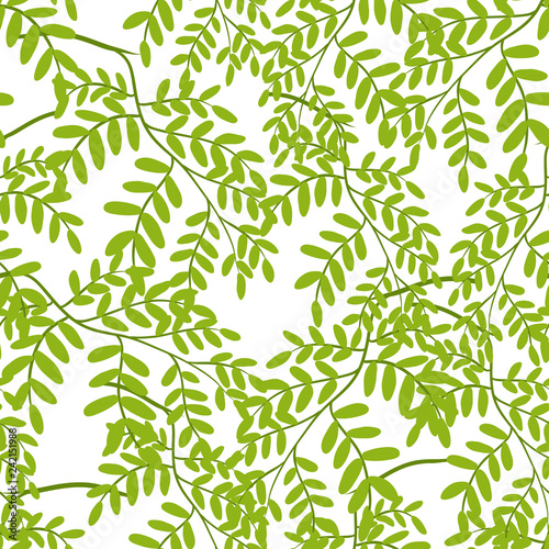 Seamless pattern with acacia leaves.
