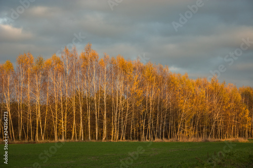 Green meadow, autumn birch forest and clouds in the sky