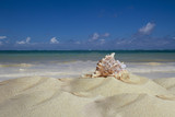 Landscape with a shell on a tropical beach on the ocean. - 242161985