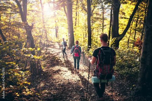 Leinwandbild Motiv Trekking with backpacks on forest trail, group of tourists