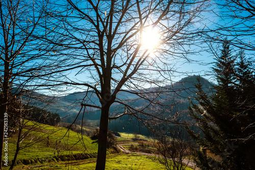paesaggio autunnale in collina